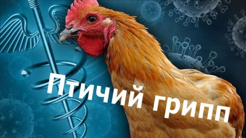 Внимание птичий грипп!